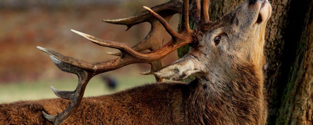 wildlife-3128367